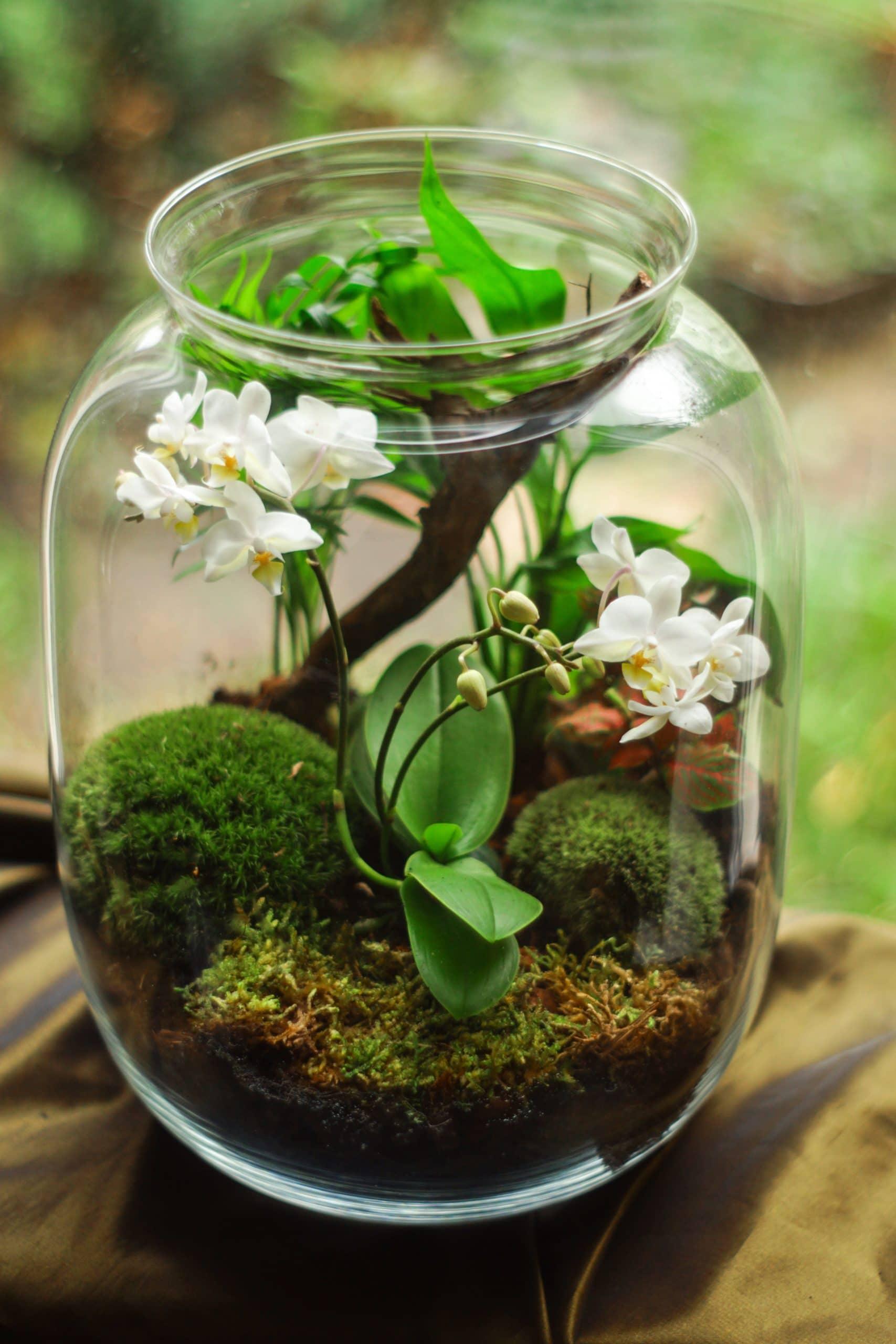 Plug and Pulse - Fleuriste - Orchidée en terrarium