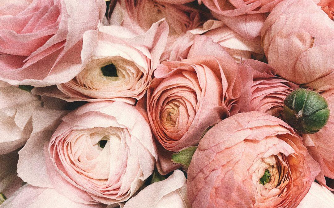 Plug and Pulse - Fleuriste - Bouquet de roses roses vue de très près